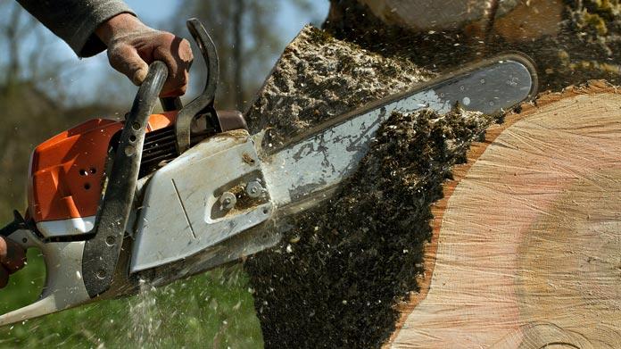 tree service insure